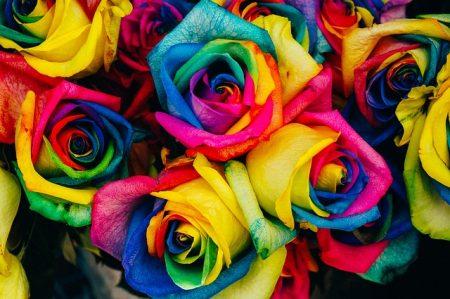 diversity celebration pride brighton 2015