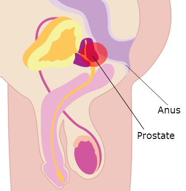 The Anal prostate finding sex