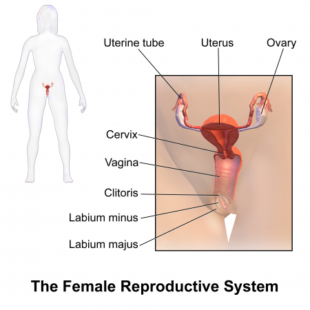 can I safely insert sex toys all the way into my vagina - diagram